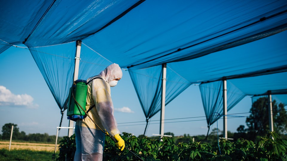 Weedspraying with correct PPE when using hazardous substances/chemicals